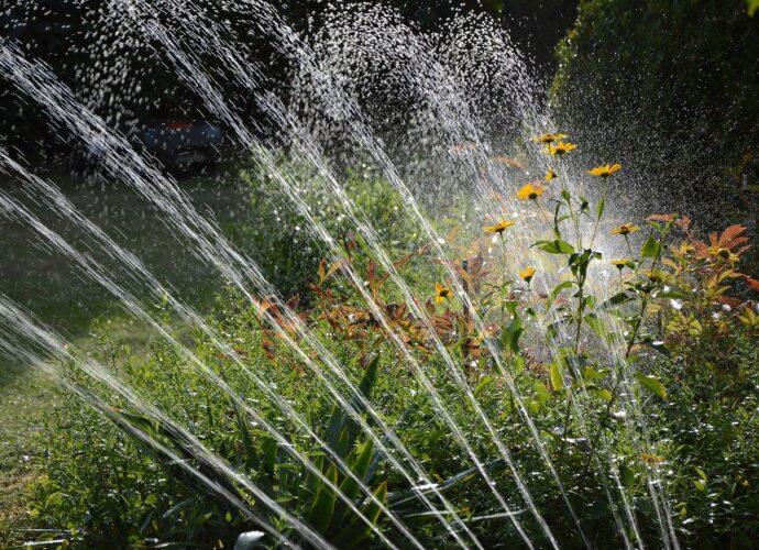 arrosage jardin